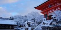 08 Hari Japan Honshu Winter